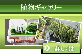 植物ギャラリー